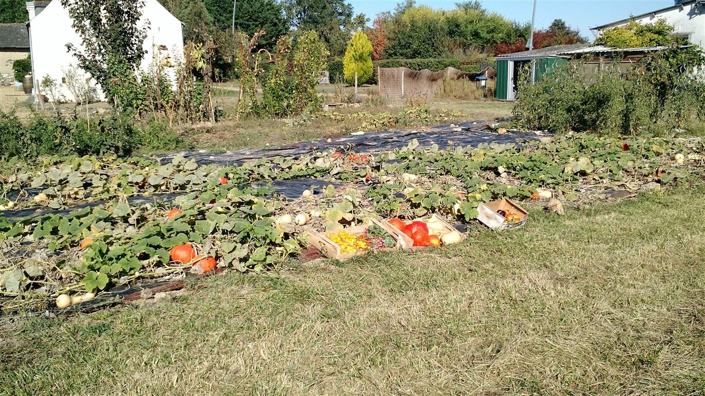 Le jardin SOLEILS49